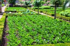 芹菜植物的领域,在正方形整理预定 免版税库存照片