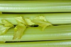 芹菜茎 库存图片