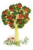 芹菜荷兰芹结构树 图库摄影