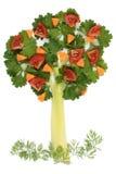芹菜荷兰芹结构树 库存照片