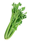 芹菜蔬菜 免版税库存照片