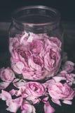 芽和瓣桃红色在黑暗的背景的一个瓶子上升了 库存图片