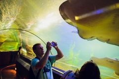 芽庄市,越南- 2月17,2018 :在oceanarium的一条黄貂鱼鱼挖洞的一张年轻人图片 库存图片
