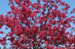芽粉红色 库存图片