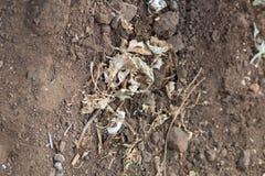 苍白棕色干燥植物叶子的一汇集 库存图片