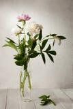 苍白牡丹花束  库存照片