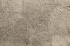 从苍白米黄颜色叶子的背景  免版税库存图片