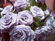 苍白紫色罗斯 免版税库存照片