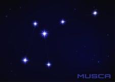 苍蝇座星座 库存图片