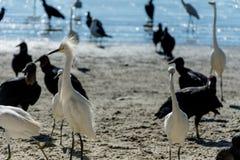 苍鹭、雕和鸥 免版税图库摄影