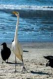 苍鹭和雕 免版税图库摄影