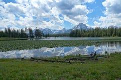 苍鹭池塘和Jackson湖有美妙地被构造的云彩的荷花和反射的 免版税库存图片