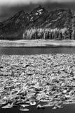 苍鹭池塘 图库摄影