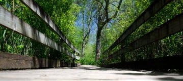 苍鹭足迹桥梁的没有人民在Marymoor,雷德蒙德, Washingto 免版税库存照片