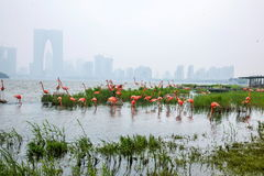 苏州金鸡湖市雕塑---火鸟 库存图片