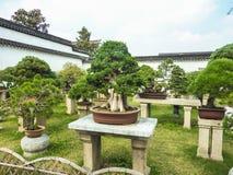 苏州,中国- 2013年10月23日:盆景树在谦逊的管理员` s庭院里 免版税库存图片
