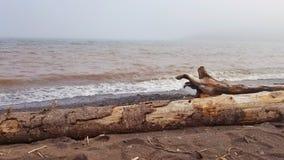 苏必利尔湖畔漂泊木头 免版税库存照片