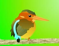 苏拉威西岛矮人翠鸟 免版税库存图片