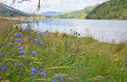 苏格兰夏天横向 免版税库存图片