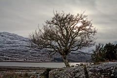 苏格兰日落树型视图 免版税库存照片