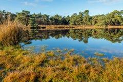 苏格兰松树树在镜子光滑的水表面反射了 免版税库存照片