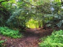 苏格兰森林地道路 库存照片