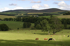 苏格兰的美好的横向 库存图片