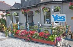 苏格兰的花? 免版税图库摄影