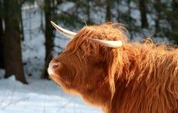 苏格兰盖尔语高地 免版税库存照片