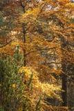 苏格兰秋季叶子 库存照片