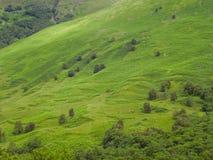 苏格兰自然在夏天 免版税库存图片