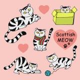 苏格兰逗人喜爱的猫的汇集 库存照片
