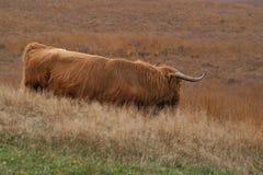 苏格兰高地居民停泊风景 免版税图库摄影