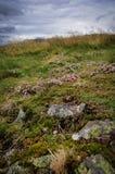 苏格兰高地植被 免版税库存图片