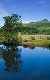 苏格兰,夏天横向 库存照片