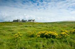 苏格兰绿色风景,农场在奥克尼郡岛 免版税库存图片