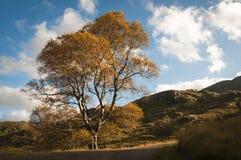 苏格兰 Lochaber 10月2104 免版税库存照片