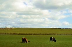 苏格兰s自然 图库摄影