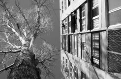 苏联大厦和树在傲德萨,乌克兰 库存图片
