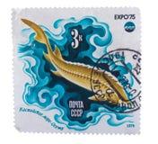 苏联大约1975年:邮票在展示鱼Sturgeo打印了 免版税库存图片