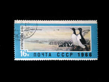 苏联的邮票关于企鹅的图象,名字的鸟` s市场,北极的鸟,在图象,老pri的新闻 免版税图库摄影