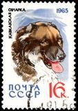 苏联-大约1965年:邮票,打印在苏联,显示一只白种人牧羊犬、系列狩猎和服务狗 免版税库存图片