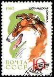 苏联-大约1965年:邮票,打印在苏联,显示一条大牧羊犬狗、系列狩猎和服务狗 免版税图库摄影