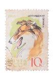 苏联-大约1965年:在展示大牧羊犬打印的邮票 库存图片