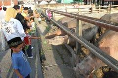 苏腊卡尔塔宫殿神圣的水牛  免版税库存照片