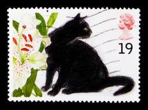 苏菲猫属silvestris catus,猫serie,大约1995年 免版税库存图片