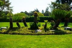 苏铁在日本庭院里 库存照片