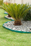 苏铁科的植物在一个岩石庭院里 免版税库存照片