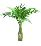 苏铁科的植物在白色背景隔绝的棕榈树 库存照片