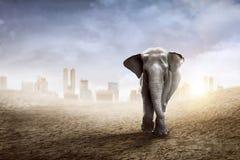 苏门答腊在沙漠的大象步行 免版税库存图片